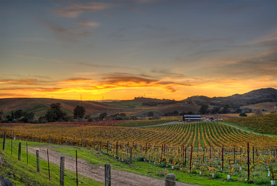 Fall sunset in Napa Valley, California.
