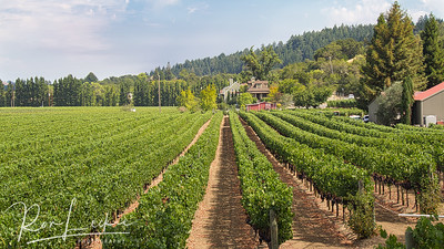 Northern California - Sonoma County - Dry Creek - A. Rafanelli Winery
