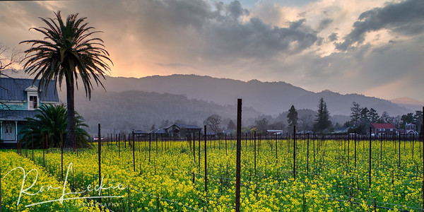 Sunset Over Napa Valley