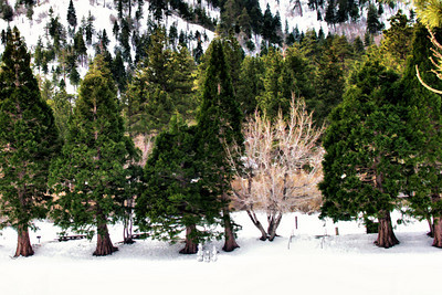 Little Snow People in the Big Wilderness :-)