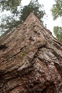 Sequoia Soaring