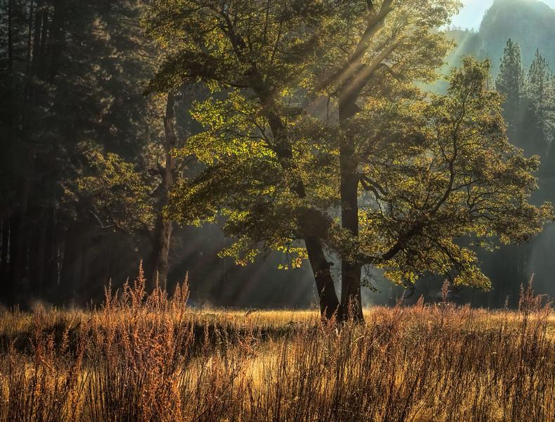Luminous Meadow