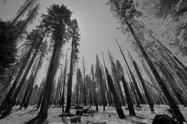 Yosemite - September 2011