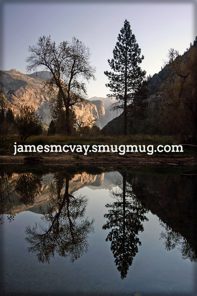 Tree Reflection Fall Yosemite