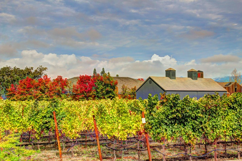 Turnbull Vineyards
