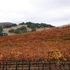 Sonoma November