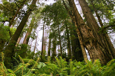 Jedediah Smith Forest in Northern Califonia  Photos by Kyle Spradley | www.kspradleyphoto.com