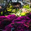 Japanese Tea Garden<br /> San Francisco, CA