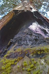 Up Tree Moss 0078