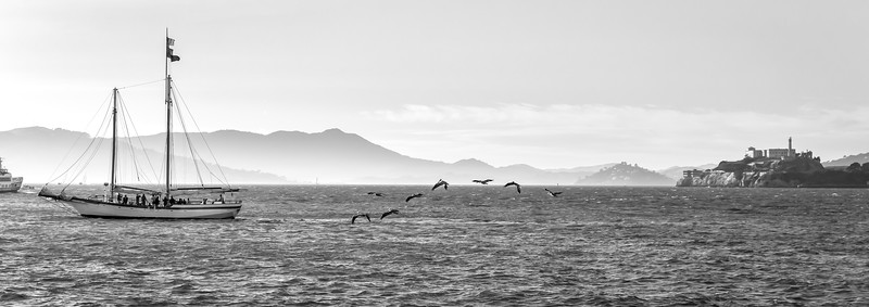 Pelicans and Alcatraz