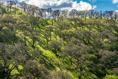 Castle Rock Park, Walnut Creek CA