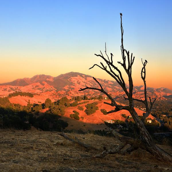 "Mt. Diablo. Sunset 16""X16"""