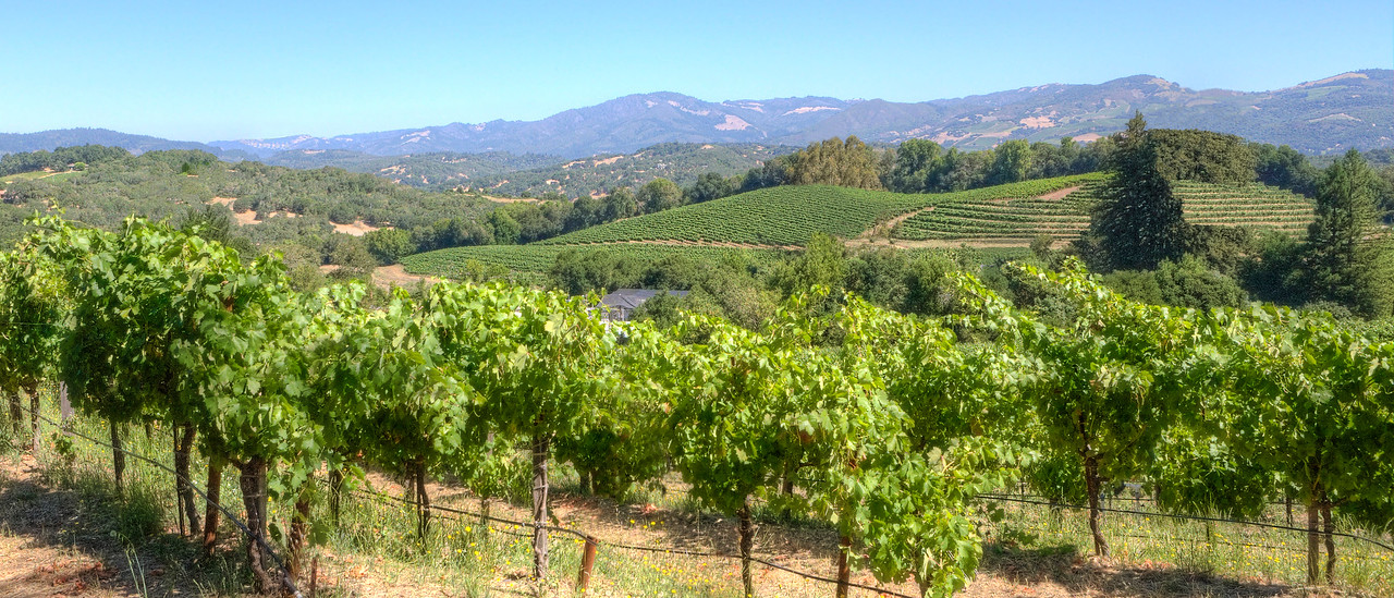 """Sonoma Vineyards on a Clear Day. 30""""X13"""""""