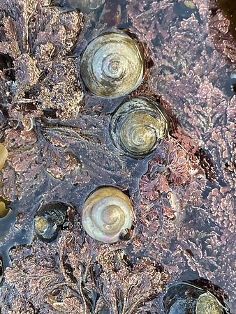 Trio of Snails