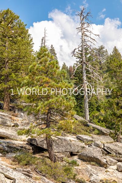 San Fran_Lake Tahoe Trip 2017-1463-80.jpg