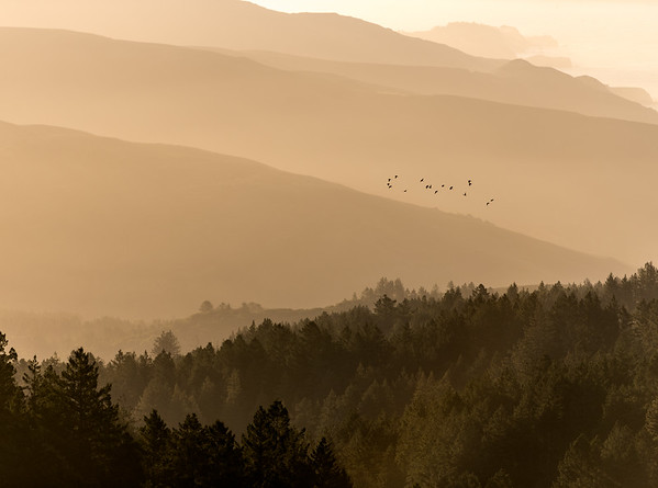 Birds over Mt. Tamalpais State Park