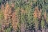 Trees along Highway 120 near Yosemite National Park, California, USA