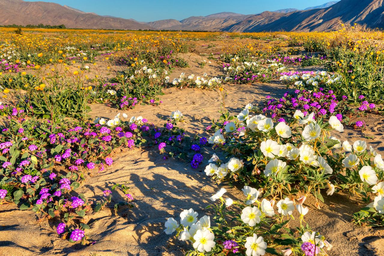 8579 Desert Lilly