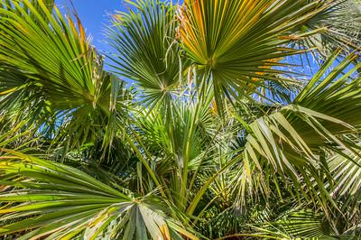 Apparent palm tree farm in Blythe, California