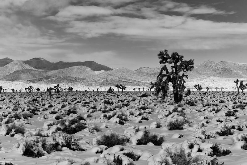Joshua Tree and Nelson Range, Inyo County, CA