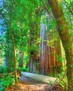 222 Redwoods