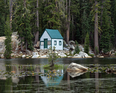 Cabin and Forest, Alpine County, CA