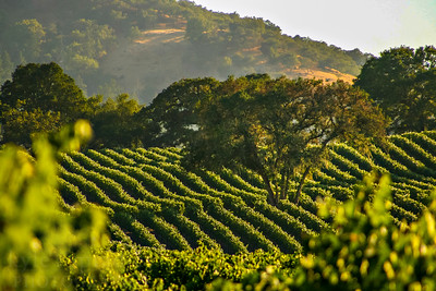 Napa Valley.   Photo by Kyle Spradley | www.kspradleyphoto.com