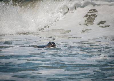 Sea Otter, Cambria, CA