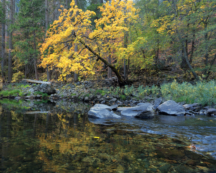 Autumn Reflections, Mariposa County, California