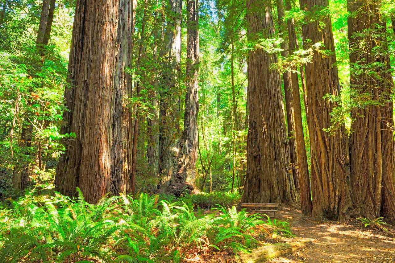 373 Tall Trees
