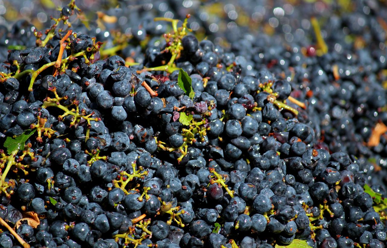 Healdsburg Harvest