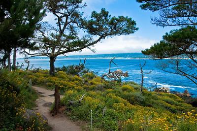 Point Lobos State Reserve, Carmel ,CA