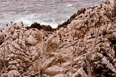 Comorants, Point Lobos State Reserve, Carmel CA