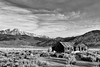 Abandoned Cabin and Mount Dana in Black and White, Mono County, CA