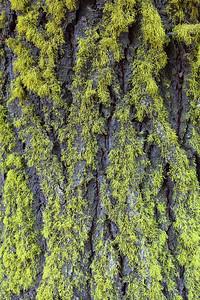 Lichen It