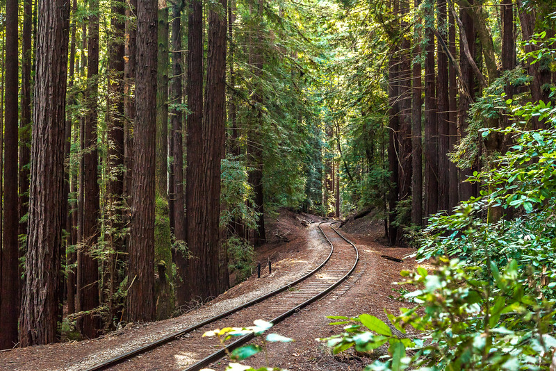 Railroad through the Redwoods