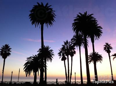 Palm Trees in Santa Monica, California