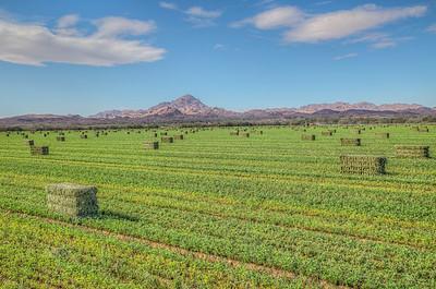 Farming in Winterhaven, California, USA