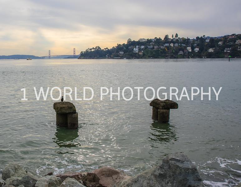 California Nov 16-22.jpg
