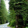 My favorite drive<br /> The costal redwoods in northern california