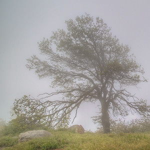 Tree on cloudy day on Strawberry Lookout Road in Rimforest, California