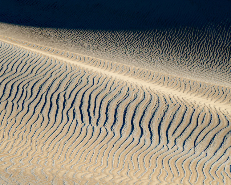 Zebra in the Dunes