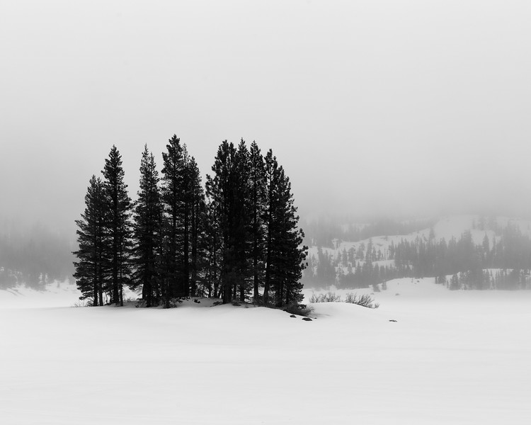 Trees and Snow, Silver Lake, CA