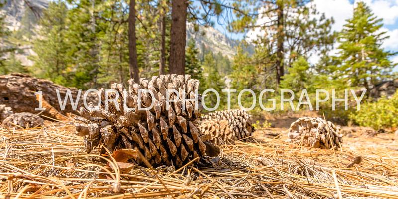 San Fran_Lake Tahoe Trip 2017-1357-74.jpg