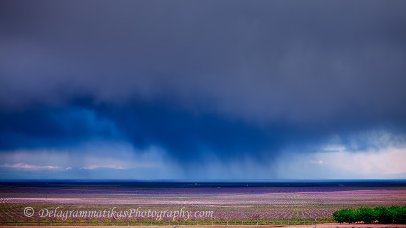 20110408_Central CA_1370