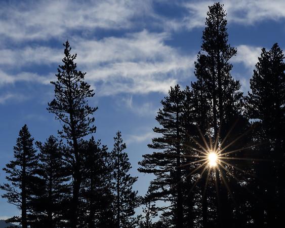Rising Sun and Trees, Yosemite National Park