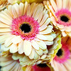Flower Market Fantasy