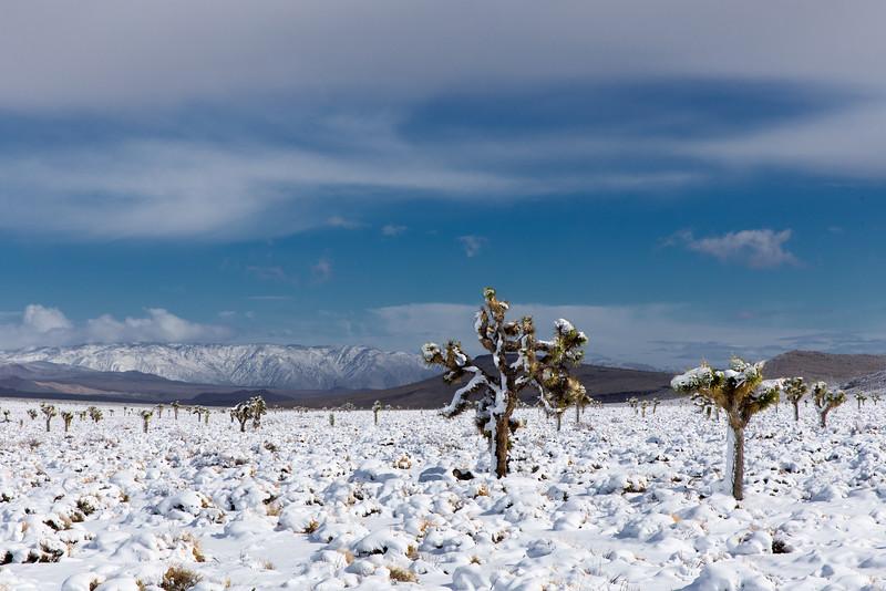Snow and Joshua Tree, Darwin Hills