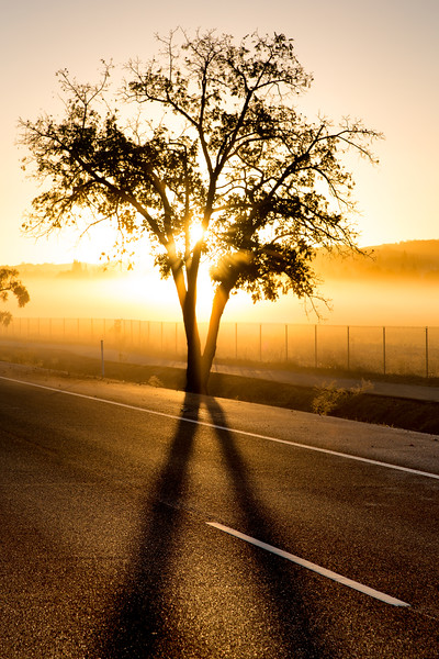 Foggy Sunrise, Pleasanton, CA