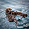 Otter and her pup